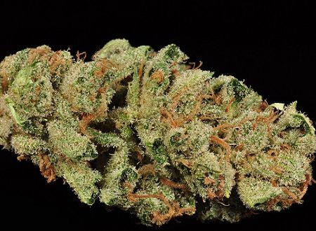 buy Ghost Train Haze weed online