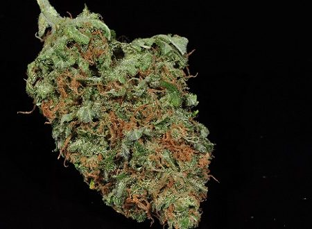 buy blue cheese weed online