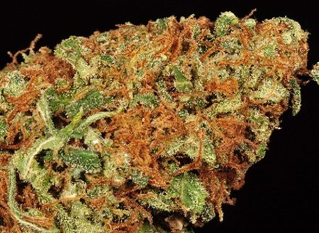 buy orange kush weed online