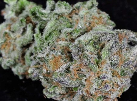 buy lemon skunk weed online